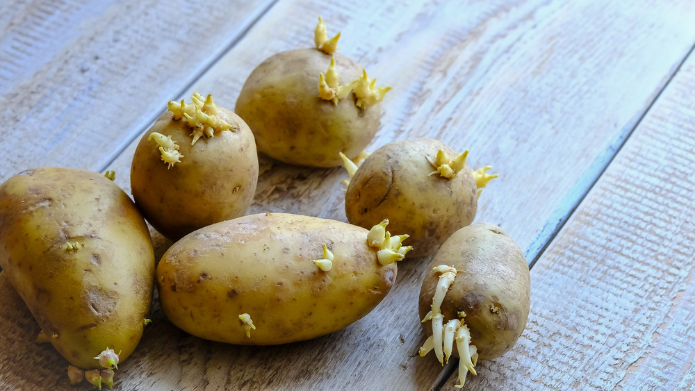 Why you should think twice before eating sprouted potatoes